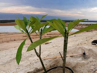 """Успешные """"экзиты"""" израильских агротехнологических стартапов"""