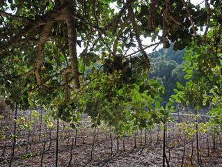 Правнук первопроходца внедряет хай-тек в сельское хозяйство