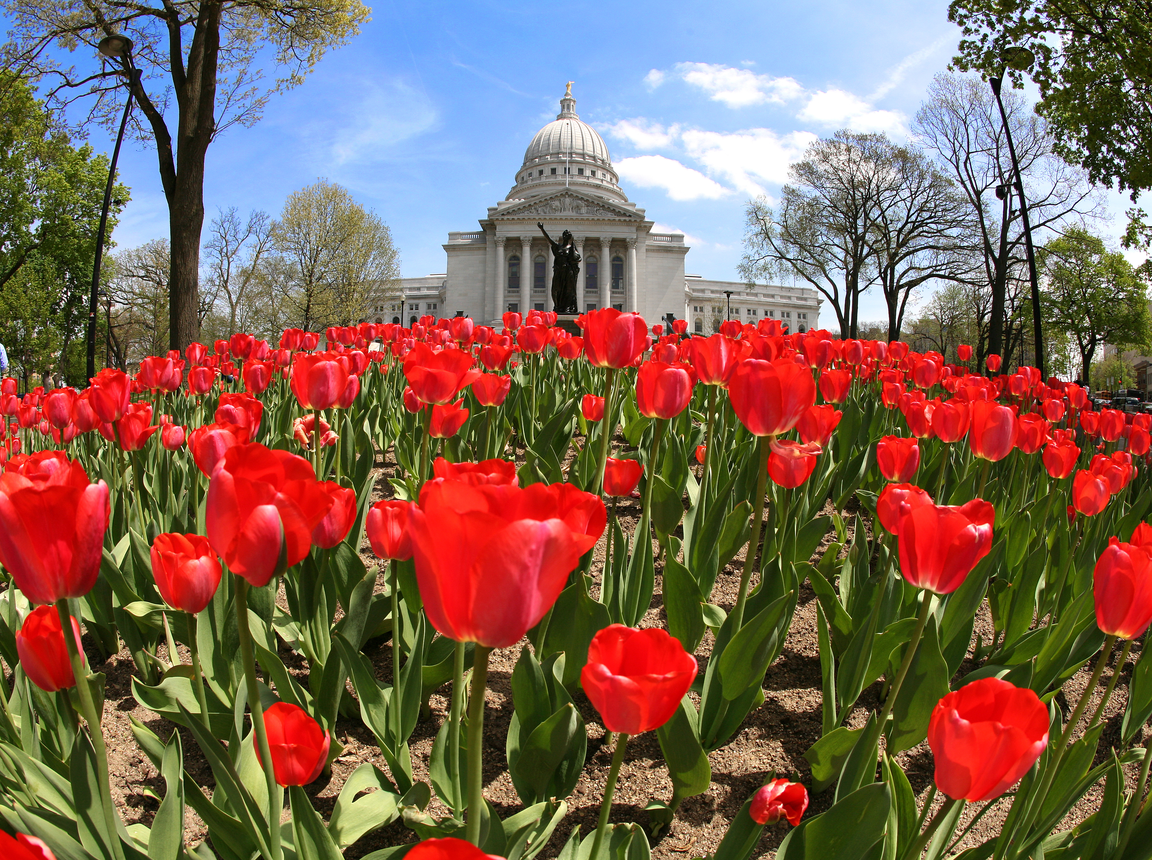 Spring at the Captiol of Madison, WI