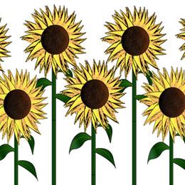 Sunflowers Graphic