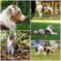 Collage-ASCA-06-groß-300x300.jpg