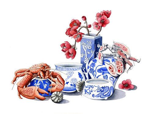 Cangrejos de porcelana