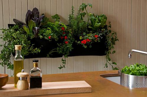 macetas horizontales.   plantas y plantas