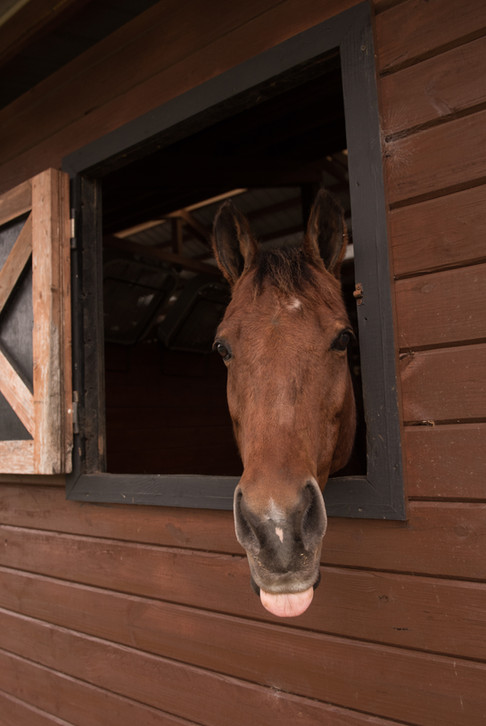 orlando horse photographer