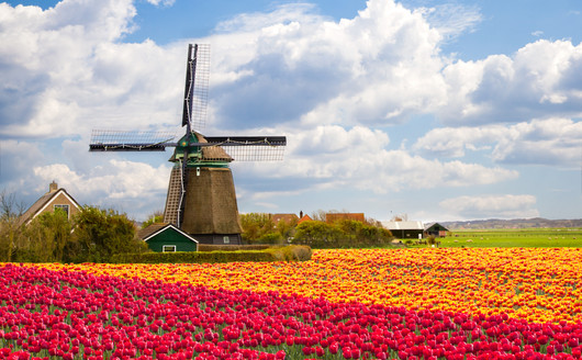 Moinho no Keukenhof - Holanda