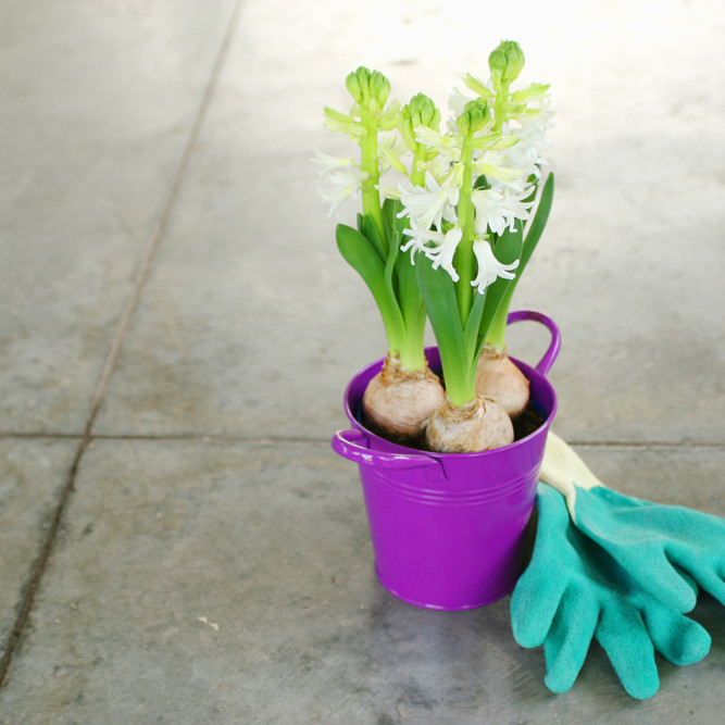 Creating spring colour with bulbs