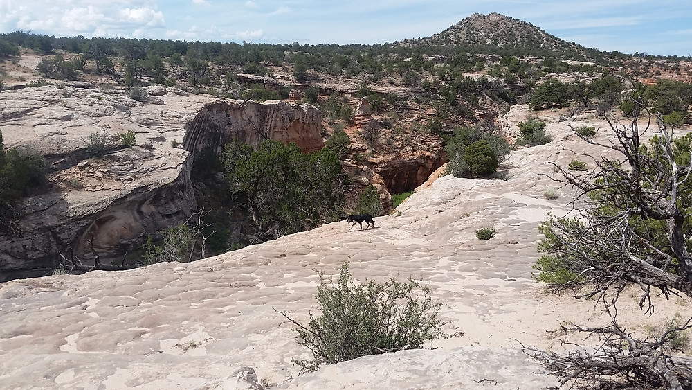 dog walking on white rock along the edge of a red cut canyon