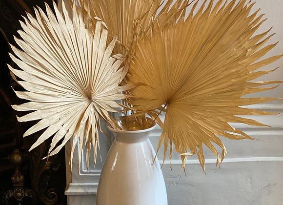 Dried Fan Palm Leaves 3 or 5 stems