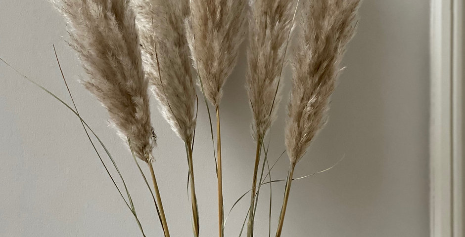 3 or 5 Stems of Natural Pampas grass