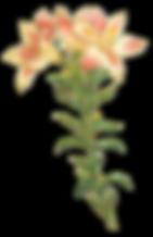 Ejemplo de la flor de tallo largo