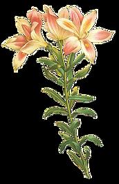 Длинный Стебель цветок Иллюстрация