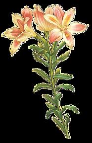 長い茎の花のイラスト