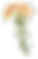Illustration Fleur longue tige