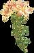 Long Stem Flower Illustration