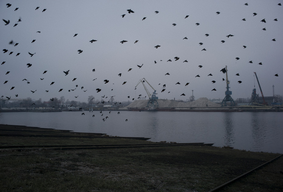 kiev_birds.jpg