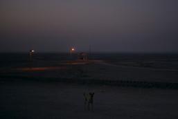 salt_lake_dog_sunrise.jpg