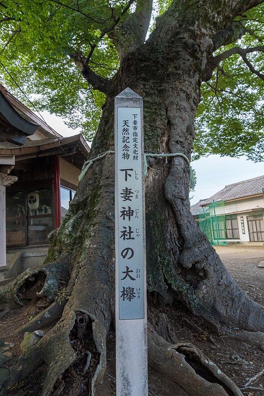 shimotsumazin0803-7.jpg
