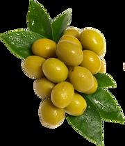 Olive2.png