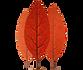 logo-psikholog-v-moskve-mitino