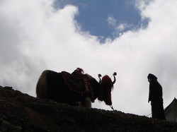 Tibet - DSC06618.JPG
