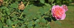 05 parc botanique de haute bretagne