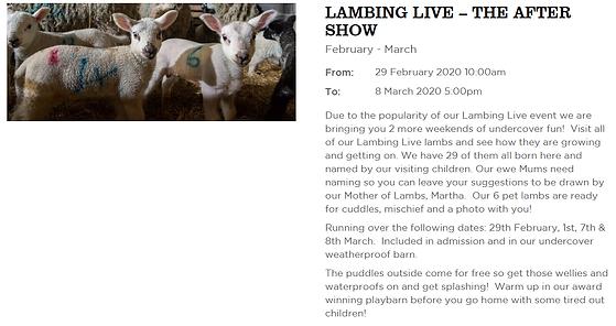 Lambing AV.png