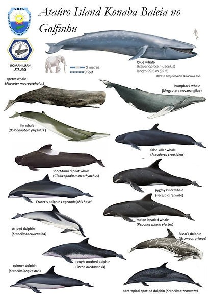 East Timor Leste Blue Whale Dolphin Common Species