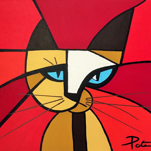 Cross Eyed Kitty