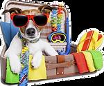 vacances-avec-mon-chien.png