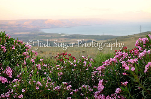 Kinneret and Flowers