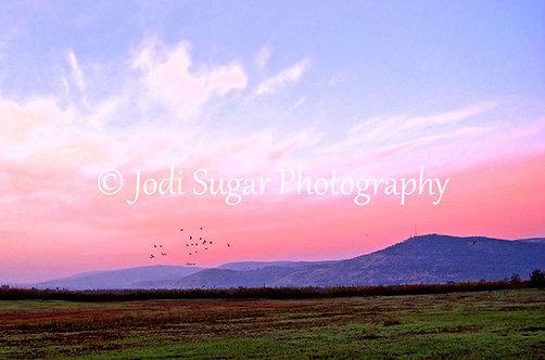 Hula Valley at Dawn
