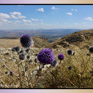 9.-rosh-pina-valley-may.jpg