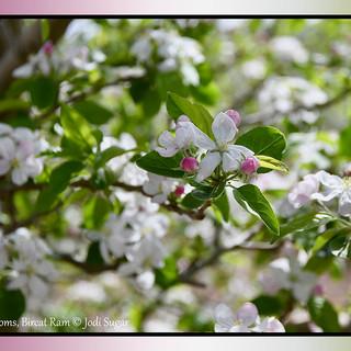 8.-cherry-blossoms-april-2022.jpg