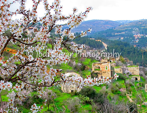 Blossoming Almond Trees, Lifta