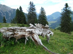Holzstumpf.jpg