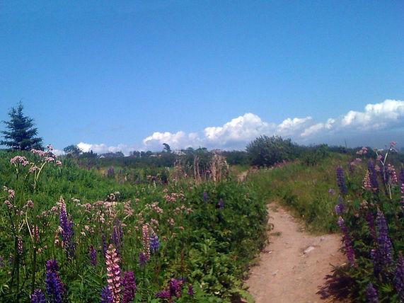 Blank Banshee - Shoreline Trail
