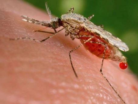 Científicos sudafricanos descubren nuevos químicos que matan al parásito de la malaria