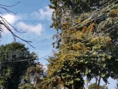 Hombre muere electrocutado cuando bajaba frutos de un árbol