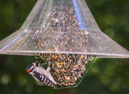 The Best Clean Label Suet Cakes for Wild Birds - 2019