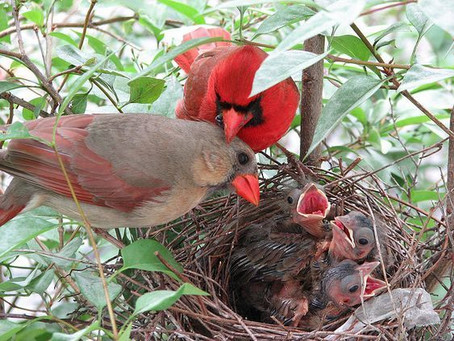 How Are You? Back Yard Birding Can Help Reduce Anxiety - and a free offer to help