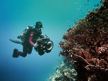diving the Ultramarine
