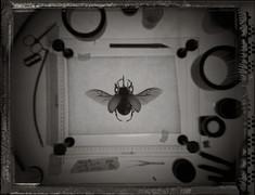 Nashornkäfer, Polaroid making of