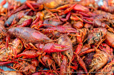 King Cotton Crawfish Boil, Starkville, Mississippi
