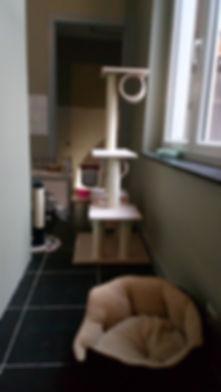 hôtel hailie hôtel pour chats