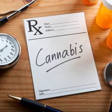 medical marijuana program info.jpg