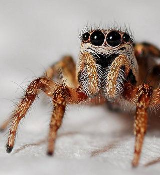 Spider Season.jpeg