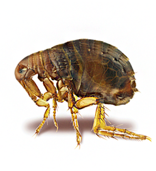 otherservices-featured-fleas-and-ticks.p