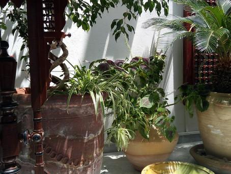 Développement durable et solidaire nous y croyons à El Patio-Tunis !