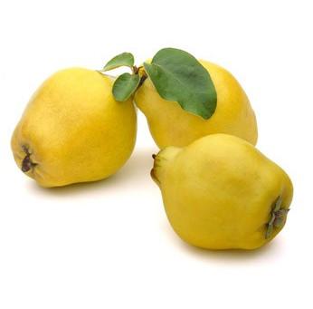 LE COING : un fruit ancien au parfum irrésistible