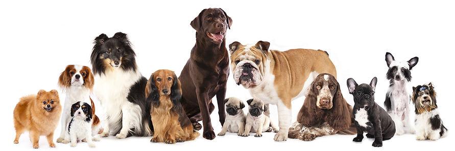 dogs in line.jpg